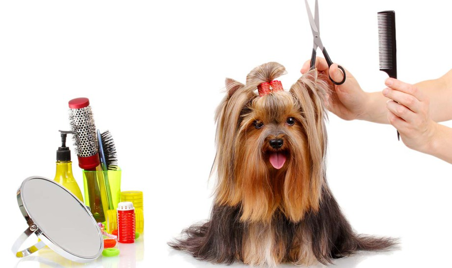 free download pet grooming cartoon images
